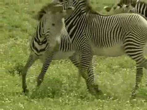 imagenes de animales la selva los animales de la selva youtube