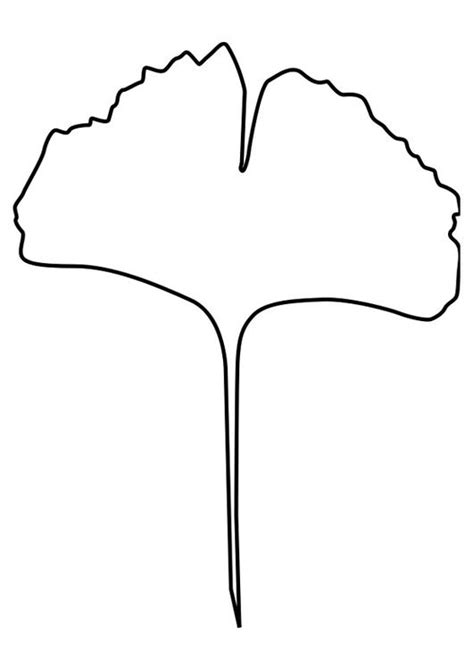 beech tree coloring page beech leaf template clipart best
