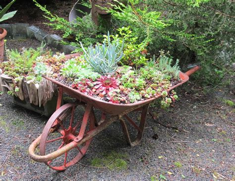Wheelbarrow Planter by May Dreams Gardens January 2012