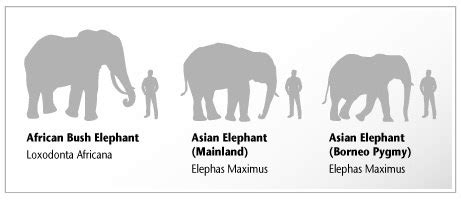 win   fight   gorilla   elephant