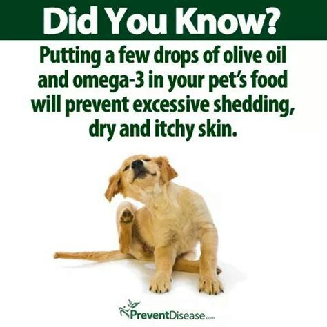 How To Stop A From Shedding Olive by 17 Best Ideas About Cat Shedding On Cat Towers