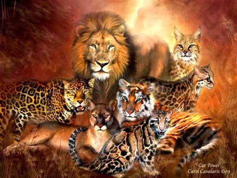 wallpaper of cat family blog fuad informasi dikongsi bersama the 7 big cat species