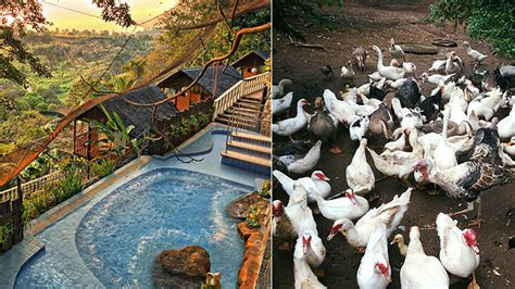 farm resorts   philippines