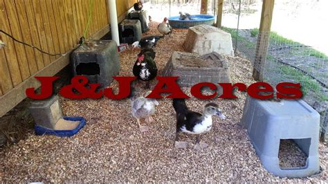 chicken bedding duck house chicken coop and other poultry coop bedding