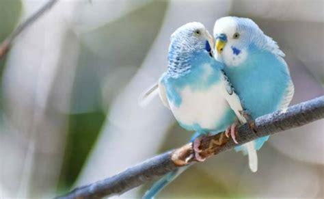 humans birds fall  love