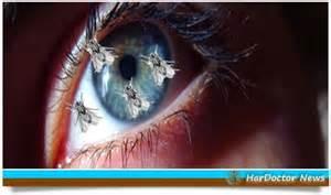mosche volanti occhio miodesopsie o mosche volanti hardoctor news il