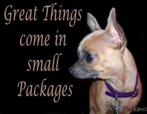 chihuahua quotes ideas  pinterest