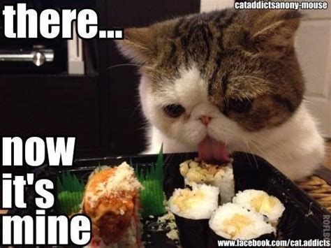 Food Cat Meme - 1000 images about meme on pinterest cats food meme and
