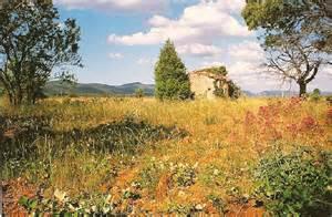 cabanon en provence photo de bastides et cabanons