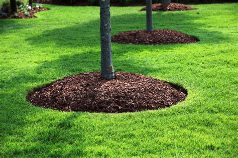 how to mulch a flower bed mulching abel tree removal