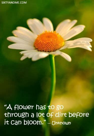 Flowers To Go by Quot A Flower Has To Go Through A Lot Of Dirt Before It Can