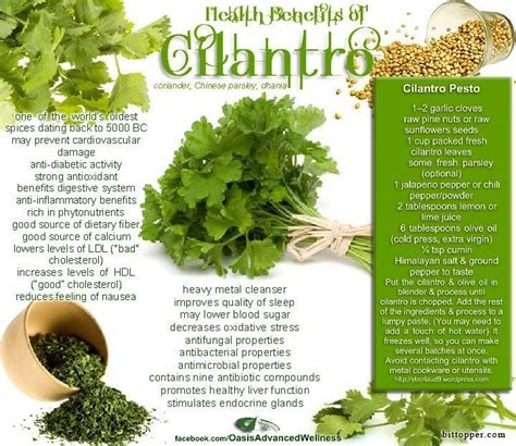 Cilantro Detox Properties by 253 Best Let Thy Food Be Thy Medicine Images On