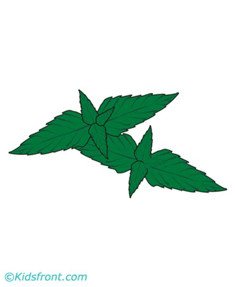 mint leaf coloring page mint coloring pages printable