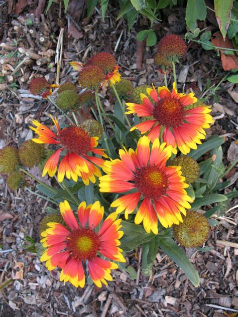 fall blooming flowers fall blooming plants for bees overall gardener