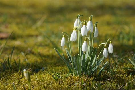 Garten Pflanzen Februar by Gartenarbeit Im Februar Tipps F 252 R Gem 252 Se Und B 228 Ume Garteln