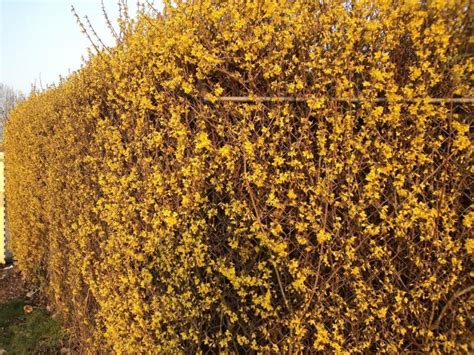 Lavendel Gießen hagen a tot z landbouwleven