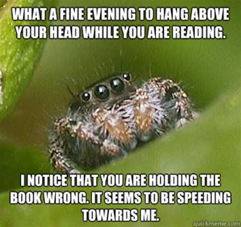 Misunderstood Spider Meme 16 Pics - image 325851 misunderstood spider know your meme