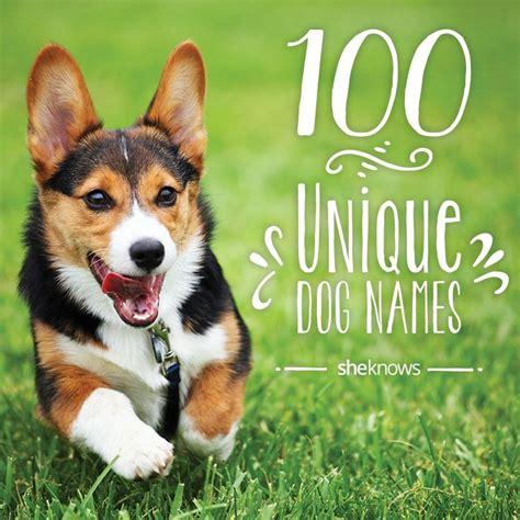 p names for dogs best 25 corgi names ideas on pembroke corgi pembroke corgi