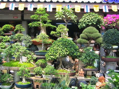 Tanaman Hias Cantik gambar tanaman hias bonsai yang unik dan cantik foto dan