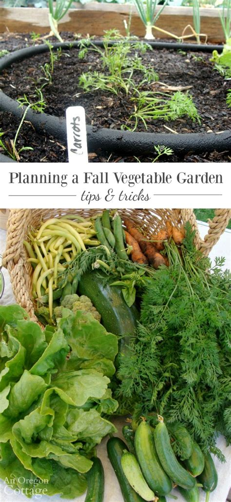 Fall Vegetable Garden Ideas Tips To Plan And Plant A Fall Vegetable Garden
