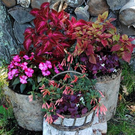 shade loving plants for containers gardening pinterest