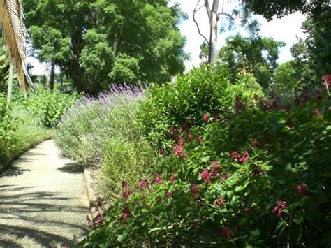 Hotels Near Botanical Gardens Brisbane An Orange Tree Picture Of Brisbane Botanic Gardens Mt Coot Tha Brisbane Tripadvisor