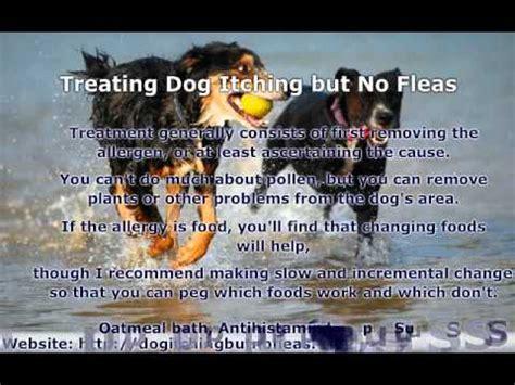 itching but no fleas itching but no fleas