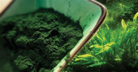 Chlorella Detox Lyme by Benefits Of Chlorella Health Alert