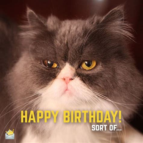Happy Birthday Sort Of by 2 Words From Animals Happy Bday Birthday Wishes