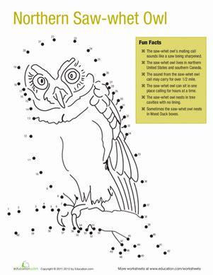 owl printables for kindergarten northern saw whet owl facts worksheet education com