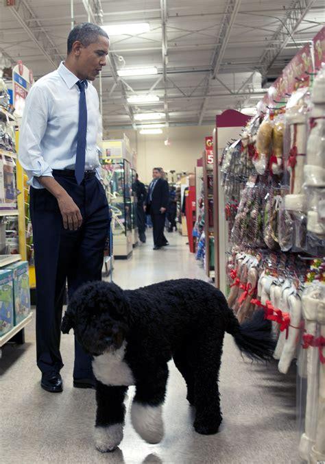 obama bo happy birthday bo obama white house turns 4 huffpost