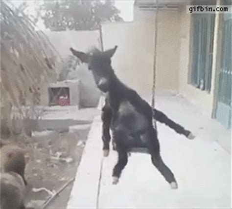 swinging gif swing donkey gif find share on giphy
