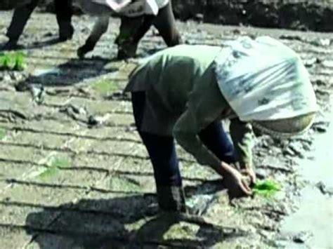 Jual Pupuk Hidroponik Karawang merintis pertanian organik doovi