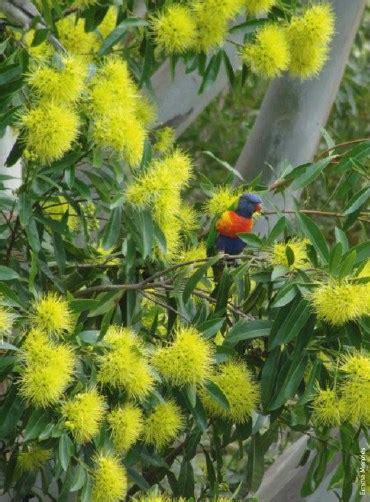 backyard biodiversity let s gardening