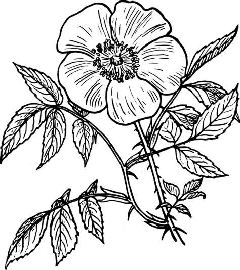 Tembakau Rawing coloriage adulte fleurs