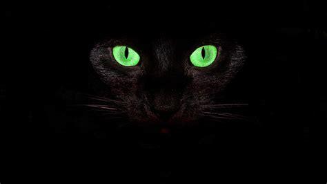 imagenes de ojos verdes de gatos fondo de pantalla gato ojos verdes