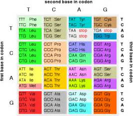 Genetic Table by Dna Mutations Winstudent