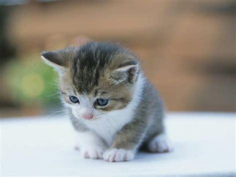 imagenes geniales de gatos image gallery imagenes de gatos tiernos