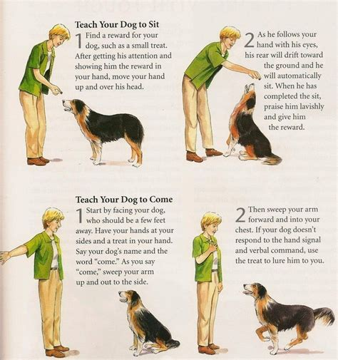 how to trained dogs basic obedience techniques for your