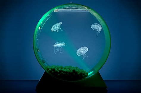 small  aquarium jellyfish