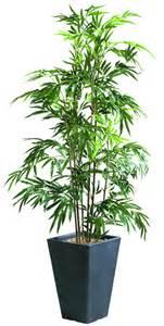 plantes mobilier bureau