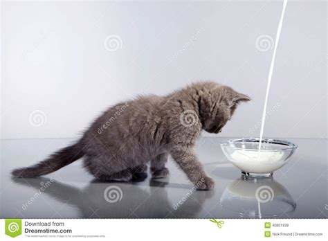 Cat Dreams Of Fish Birds Milk by Cat In Studio With Curiosity Looks Royalty Free Stock