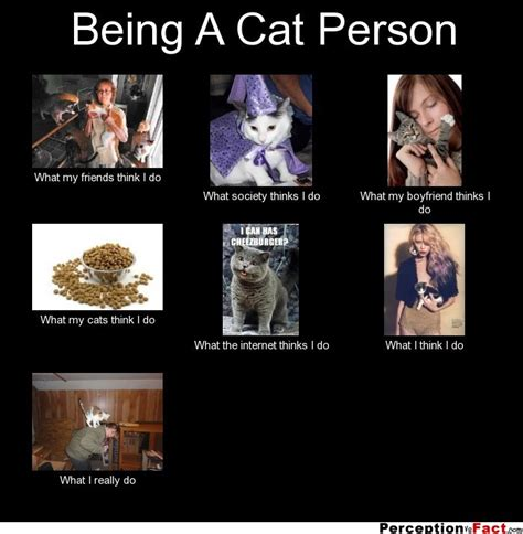 being a cat person what think i do what i