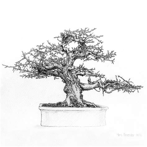 66 best images about bonsai drawing on bonsai trees tree drawings and dibujo