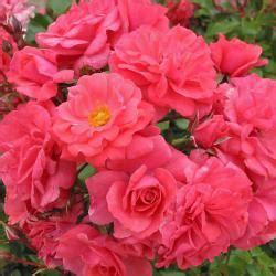 Gartengestaltung Mit 3461 by Clematis Pflanzen Mein Sch 246 Ner Garten