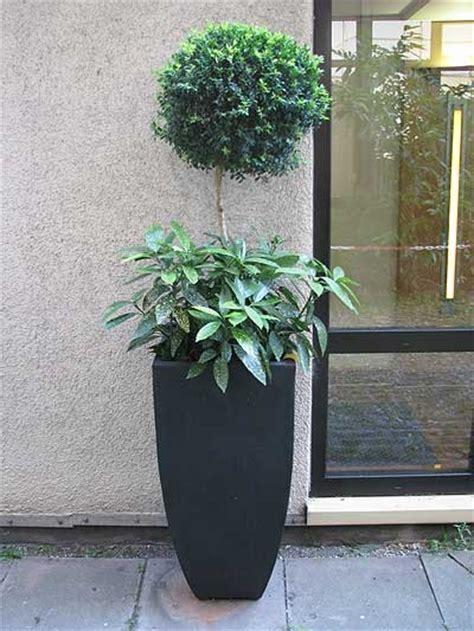 pflanzen für japangarten pflanzk 252 bel pflanzen bestseller shop