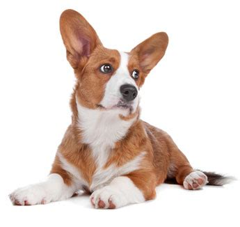 krill for dogs what is krill studies uses for dogs