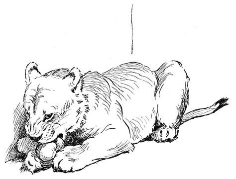 coloring pages lioness lioness free coloring pages