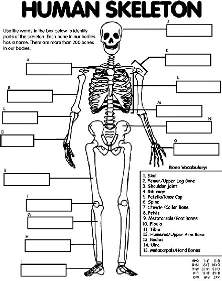 regents human anatomy coloring book human skeleton coloring page crayola
