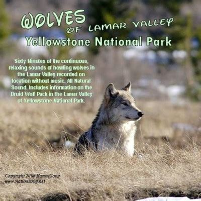 download mp3 wolves nature sounds nature cd s